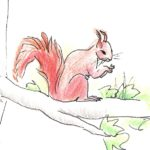 Les écureuils apposés sur les étiquettes ont été dessinés par l'artiste peintre Florence Feraa